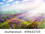 alpine meadows in the spring ... | Shutterstock . vector #459632725