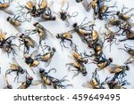 Housefly  Flies Caught On...