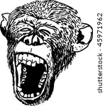 monkey etching | Shutterstock .eps vector #45971962
