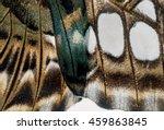 macro butterfly wing background ... | Shutterstock . vector #459863845