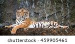Tiger Sit In Deep Wild  Animal...