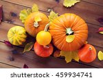 Harvest  Season  Advertisement...