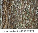 Small photo of Acacia mangium