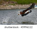 Fish Eagle Catching A Fish