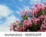 Pink Oleander Flowers On A Blu...