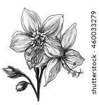 tropical jacob's ladder flower...   Shutterstock . vector #460033279