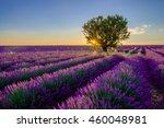 tree in lavender field at...   Shutterstock . vector #460048981