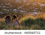 two girls sitting on mount eden ... | Shutterstock . vector #460060711