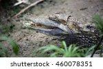 crocodile | Shutterstock . vector #460078351