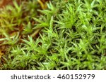 Nature Texture Of Moss With De...