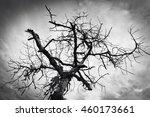 terrible dry dead tree against...   Shutterstock . vector #460173661