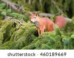 friendly squirrel smiling on... | Shutterstock . vector #460189669