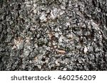 bark. bark background. vertical ... | Shutterstock . vector #460256209