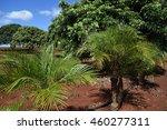 hawaiian landscape   Shutterstock . vector #460277311