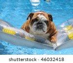 adorable family pet bull dog on ... | Shutterstock . vector #46032418