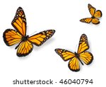Stock photo monarch butterflies isolated on white flying towards center of frame 46040794