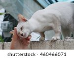 cat relax with hand scratching... | Shutterstock . vector #460466071