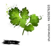 cilantro green leaves close up... | Shutterstock . vector #460587835