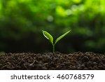 plant tree | Shutterstock . vector #460768579