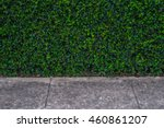 grasses and road. | Shutterstock . vector #460861207