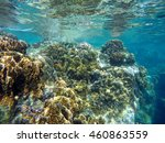 Coral Reef Of Tropical Sea...