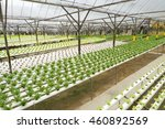 fresh green salads in the farm...   Shutterstock . vector #460892569