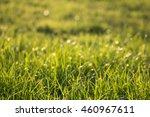 green grass background bokeh... | Shutterstock . vector #460967611
