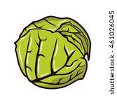 cabbage illustration vector   Shutterstock .eps vector #461026045