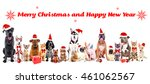 funny christmas pets. merry... | Shutterstock . vector #461062567