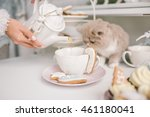 nice selkirk rex cat looking... | Shutterstock . vector #461180041