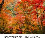 japanese maple leaf tree ... | Shutterstock . vector #461235769