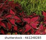 Decorative Perennial Plant...