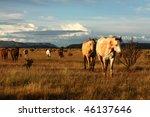 Quarter Horses On The Prairie...