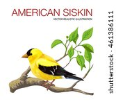 Isolated black-head American siskin. Vector illustration made in a realistic style.