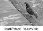 B W Pigeon