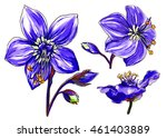 purple jacob's ladder flower in ... | Shutterstock . vector #461403889