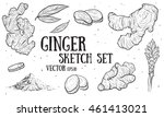hand drawn ginger root set....   Shutterstock .eps vector #461413021