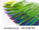 Wing Beautiful Green Parrot...