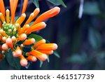 closeup of beautiful orange