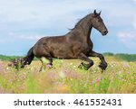 beautiful horse running among... | Shutterstock . vector #461552431