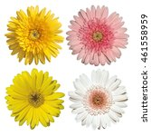 flower gerbera  barberton daisy ... | Shutterstock . vector #461558959