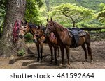 Horseback Riding In The Lush...