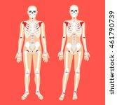 human anatomy and skeletal...
