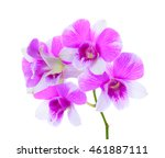 orchid flower isolated on white ... | Shutterstock . vector #461887111