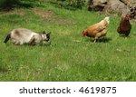 Stock photo domestic cat hunts oblivious chickens 4619875