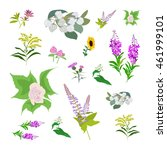 set of drawing wild flowers ... | Shutterstock .eps vector #461999101