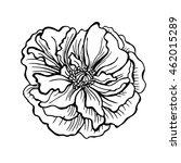 doodle vector illustration rose.... | Shutterstock .eps vector #462015289