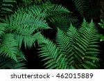 fern | Shutterstock . vector #462015889