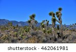Cactus Colony Under A Bright...