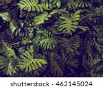 green monstera leaves texture... | Shutterstock . vector #462145024